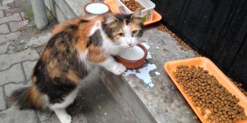 Istanbul, la ville aux millier de chats.