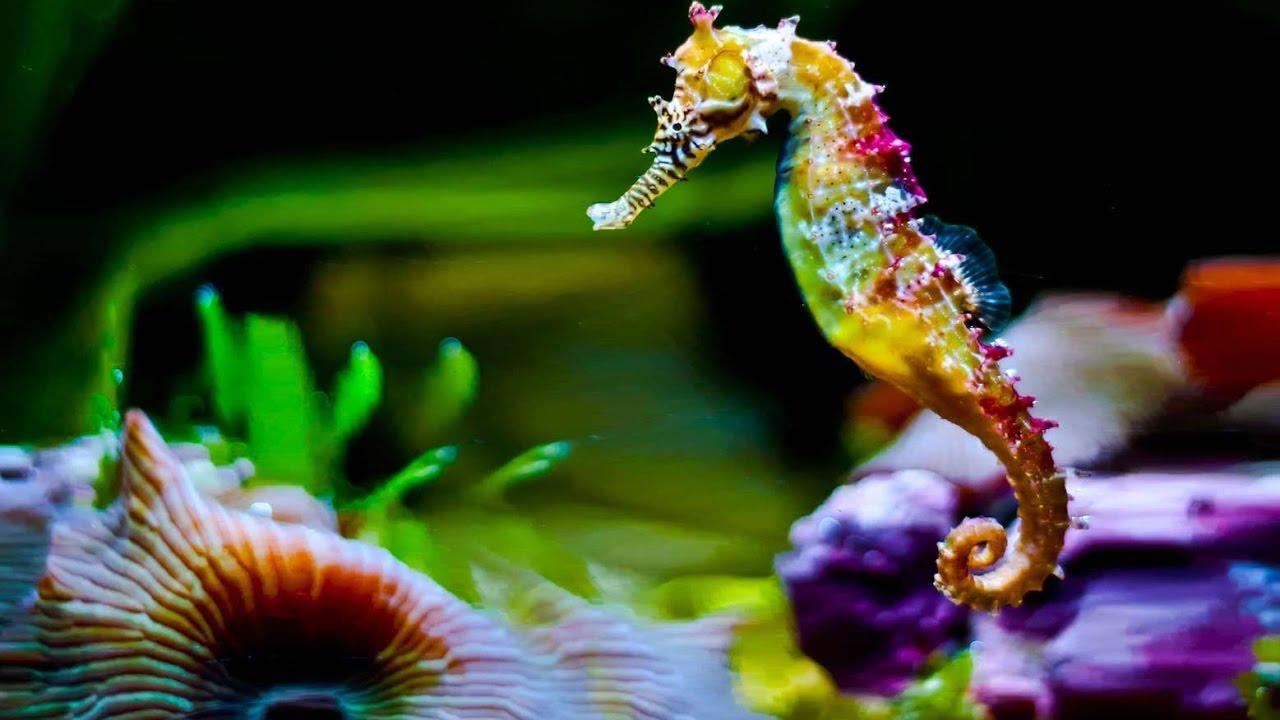 L'hippocampe, cette étrange et fascinante créature !