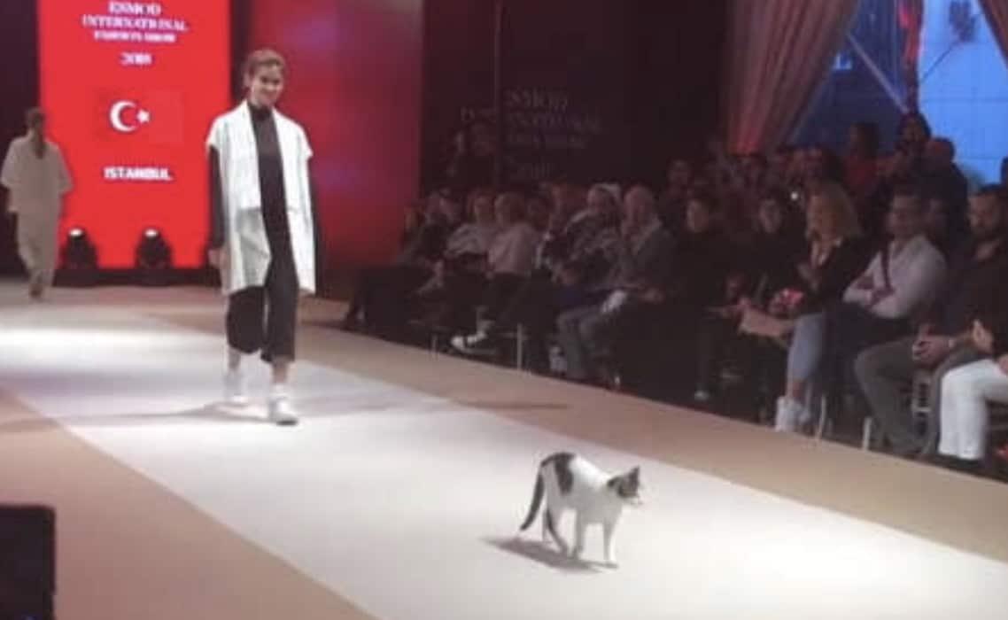Un chat mannequin sur le podium à Istanbul.