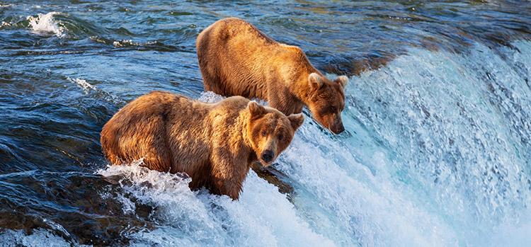 L'Alaska, une région où la vie n'est pas facile.