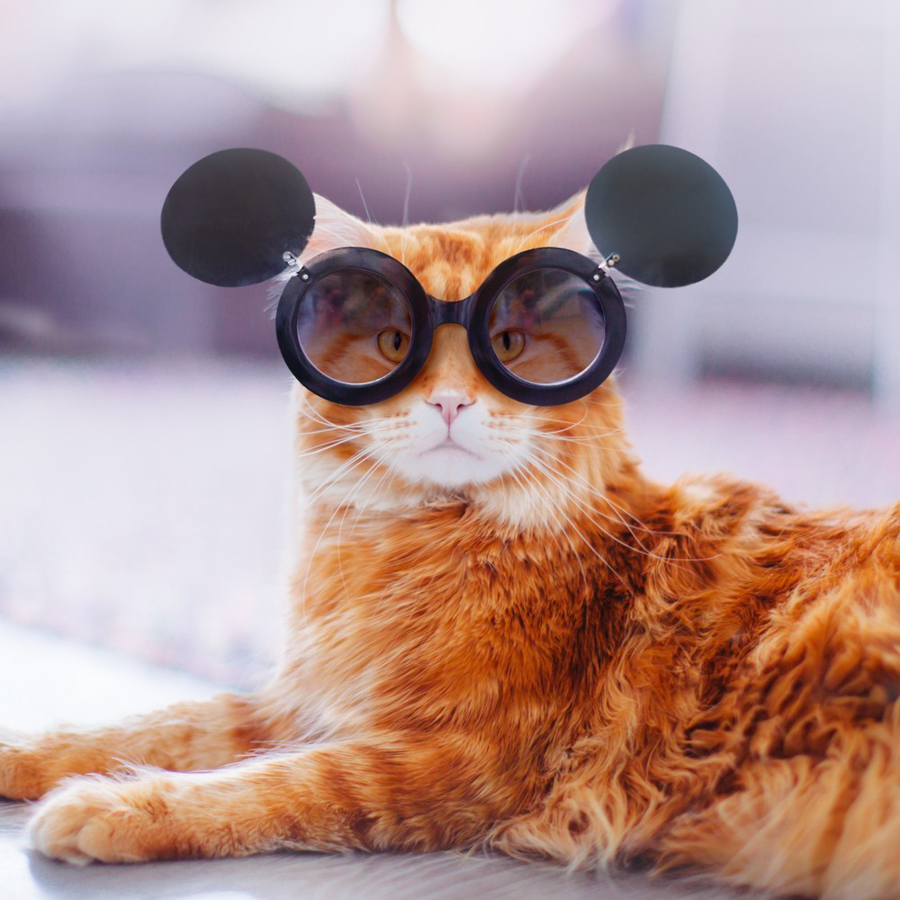 Kotleta, le chat Russe de Makeeva.