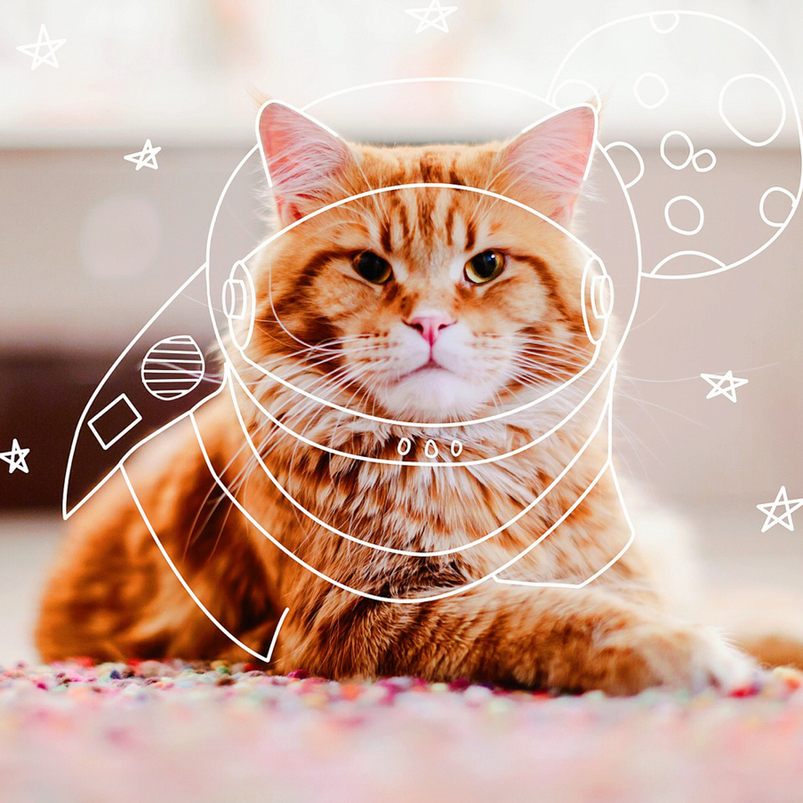 Kotleta, le chat de kristina Makeeva, Photographe.