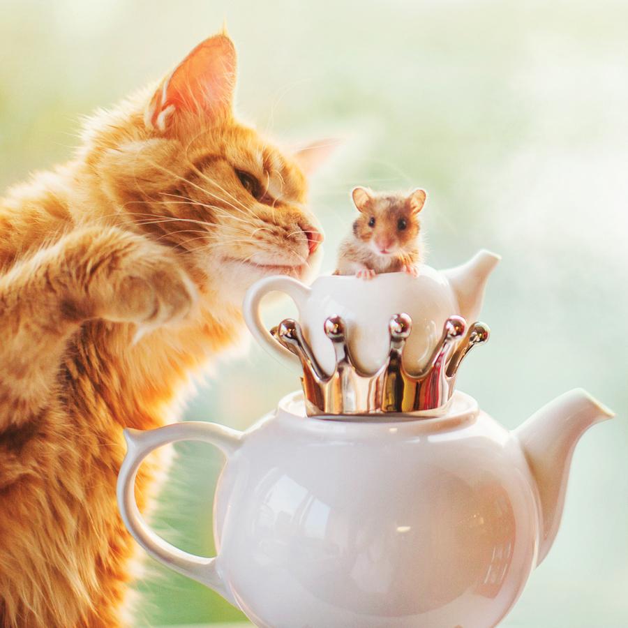 Kotleta le chat de la photographe Makeeva.