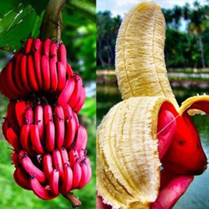 La banane rouge, un fruit magnifique.