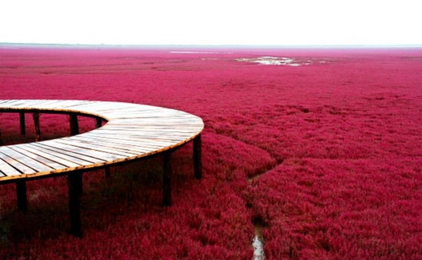 La plage rouge de Panjin en Chine.
