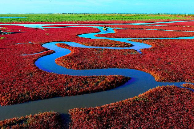 La plage rouge de Panjin.