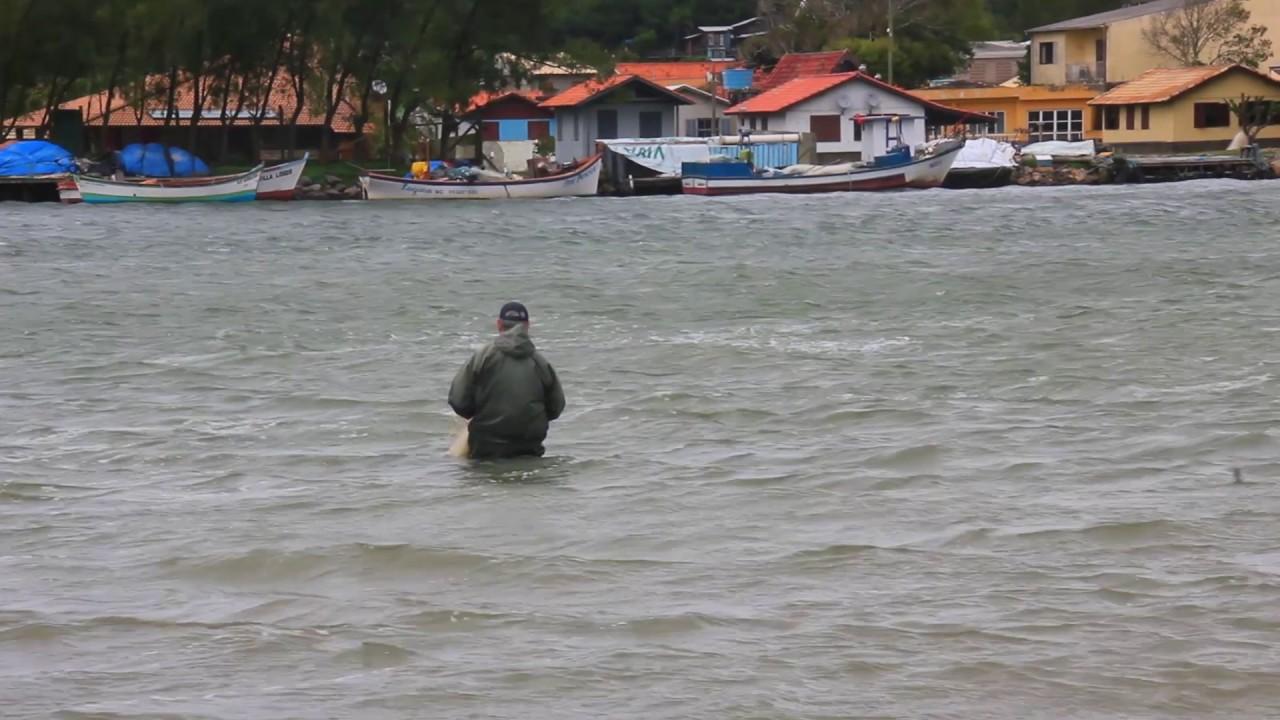 Les dauphins de Laguna, aident les pêcheurs !