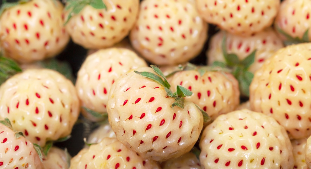 La fraise blanche ou la délicieuse Pineberry.