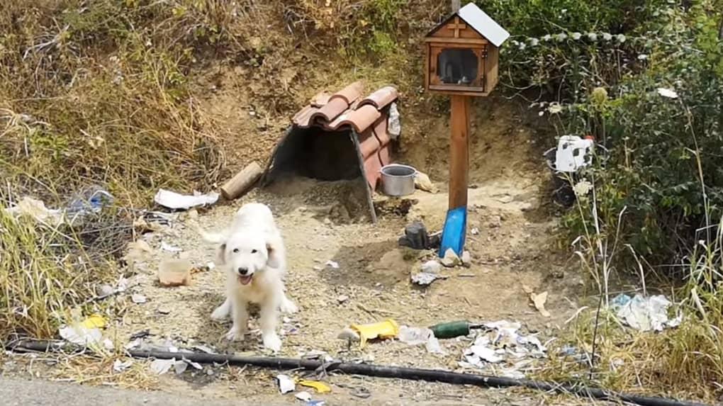 Le Hachiko Grec, un chien fidèle à son maître.