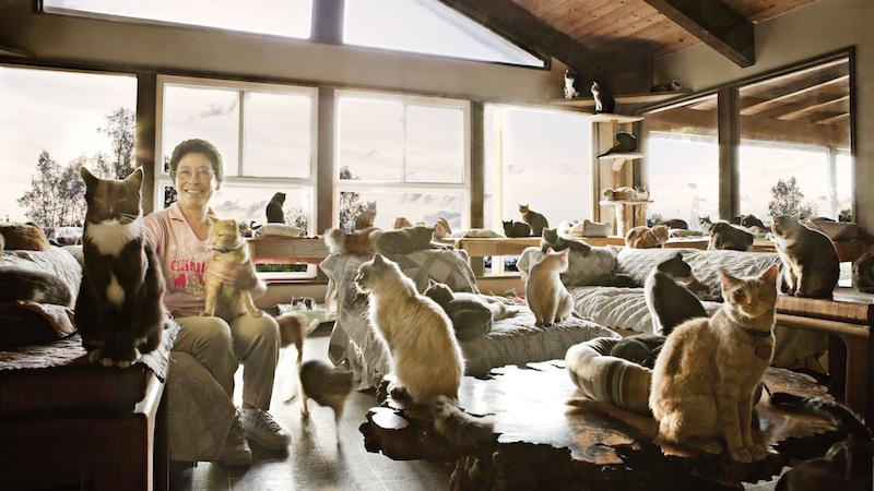 Lynea Lattanzio sauve les chats en détresse !