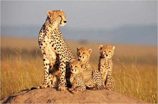 Des familles animales adorables.