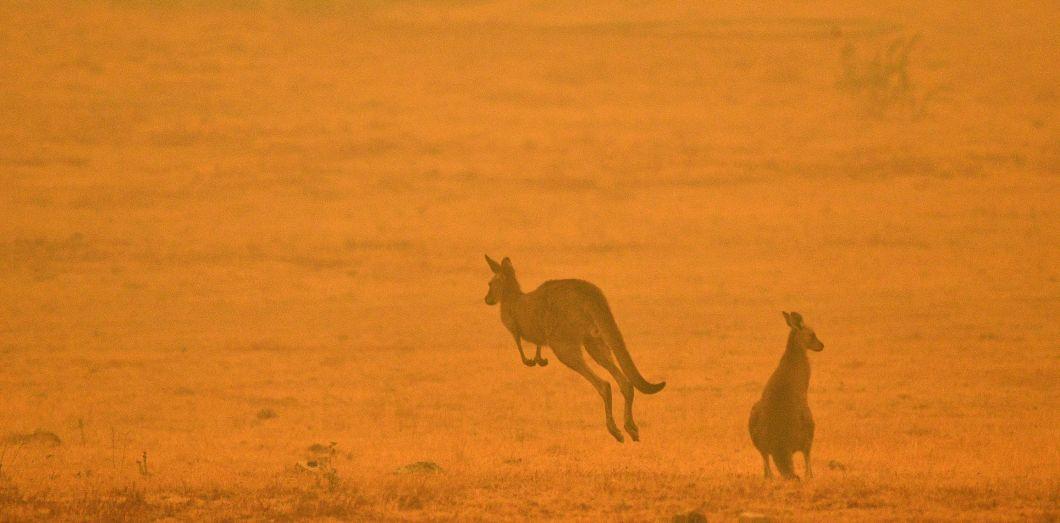 L'Australie en feu.