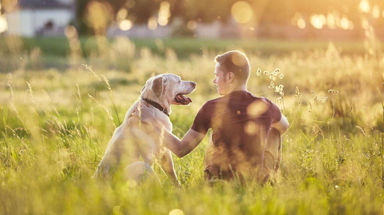 Un chien mérite d'avoir une famille