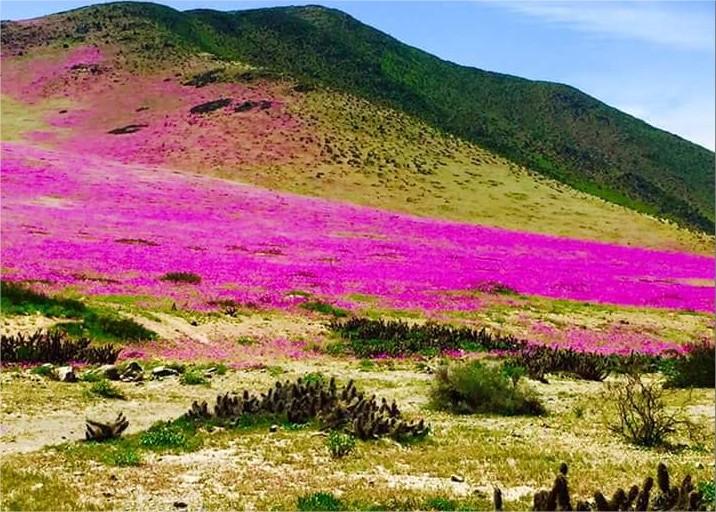 Le désert d'Acatama, aride et surprenant.