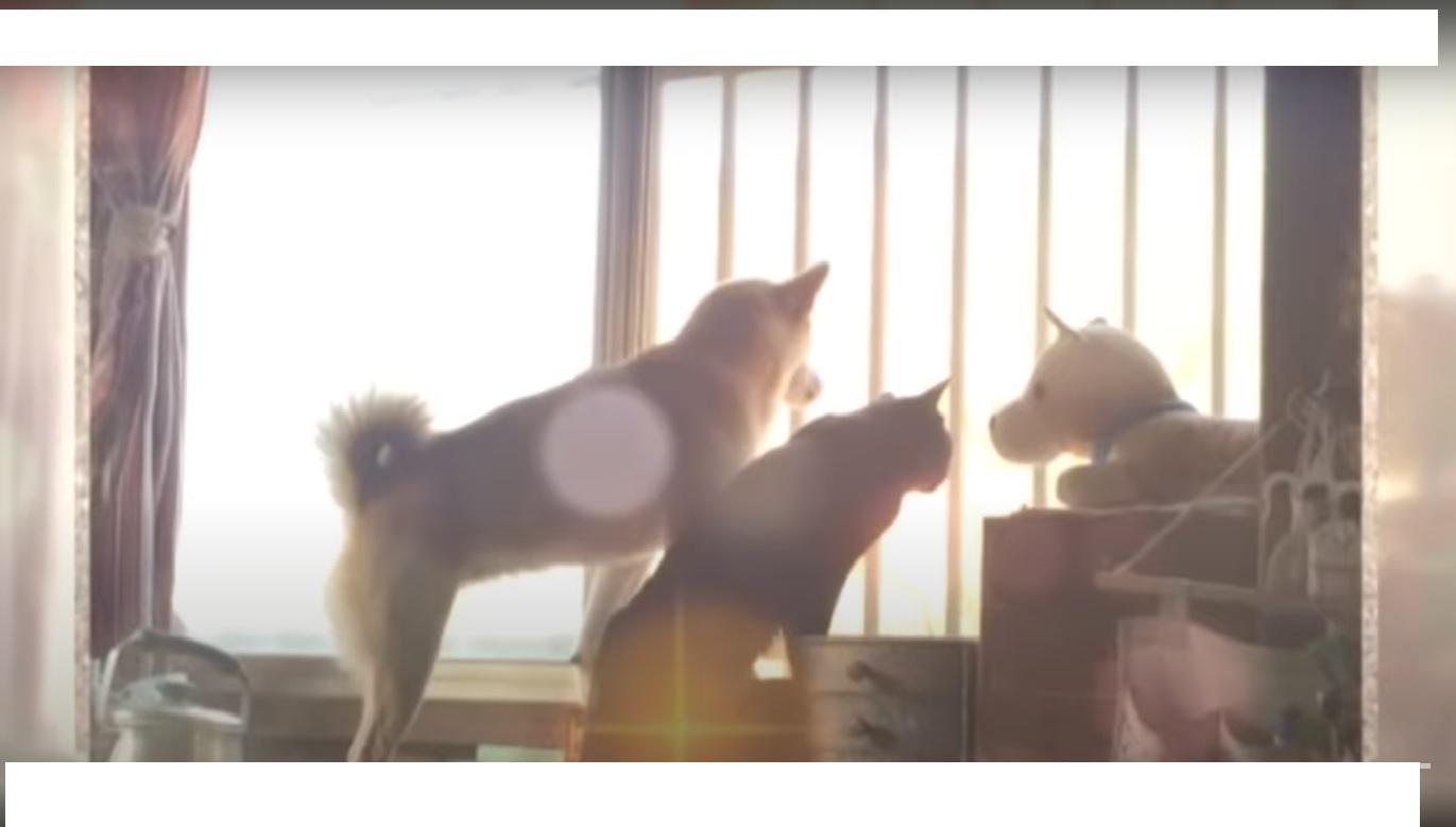 Un chat et un chien, une drôle d'amitié! (Vidéo)