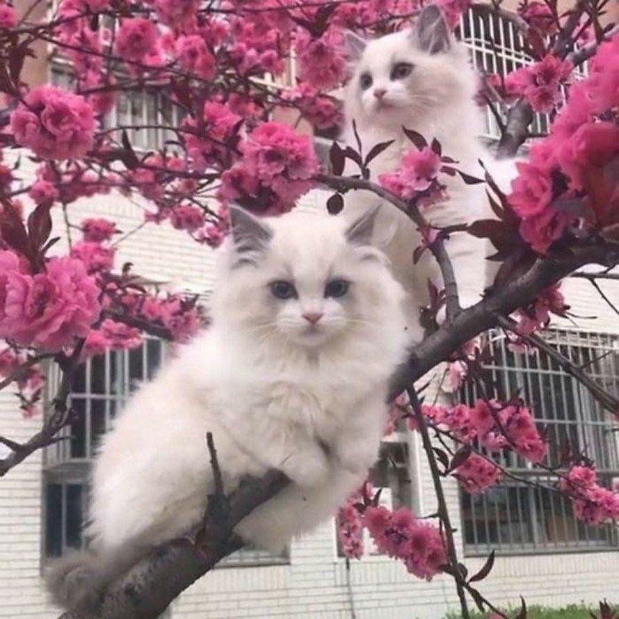 Les chats et les arbres, une histoire sans fin!