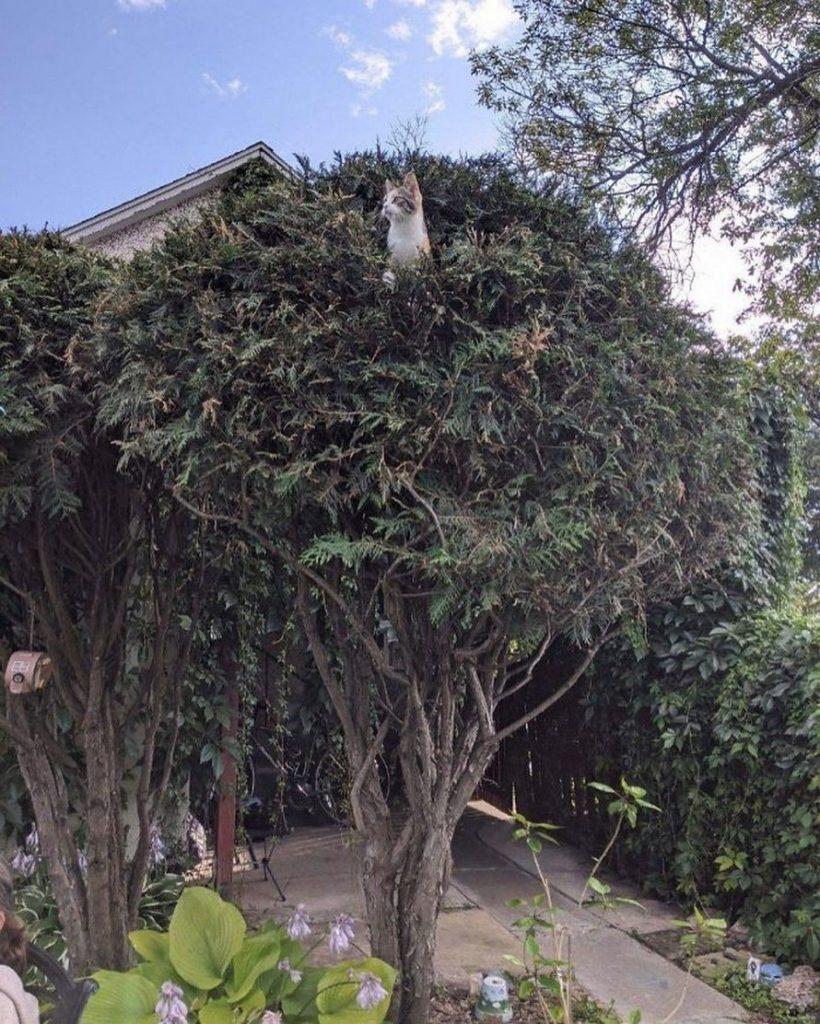 Les chats et les arbres, une histoire sans fin