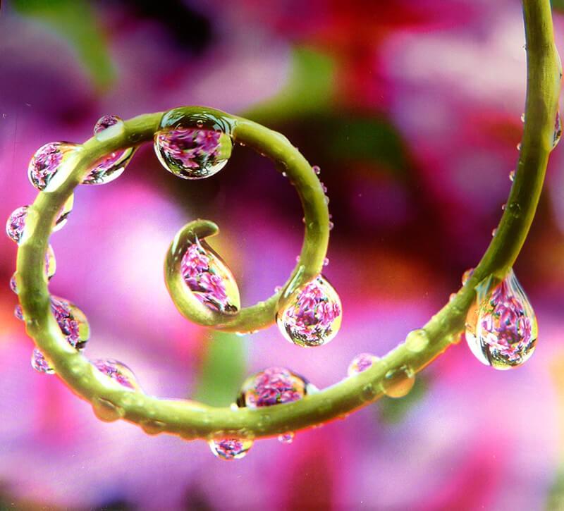 Les gouttes d'eau, de superbes clichés à admirer (ppt)