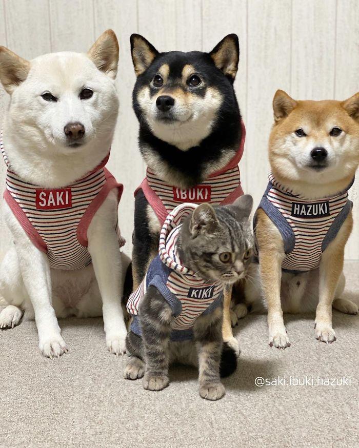 Un chat et trois chiens de la même famille
