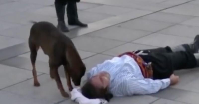 Un chien errant au secours d'un acteur qu'il croyait souffrant