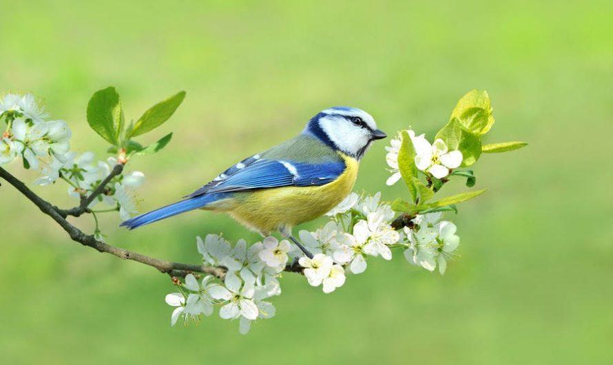La beauté des oiseaux et une agréable musique
