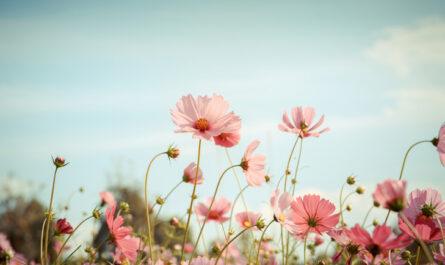 Balade dans une nature en fleurs et jolie musique!