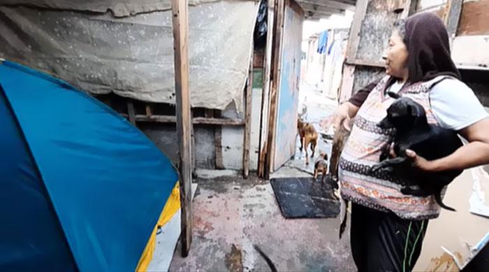 SDF avec six chiens, une histoire de fidélité