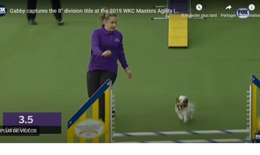 Une incroyable performance pour un chien