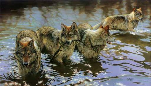 La vie d'un loup sauvage avec une caméra embarquée
