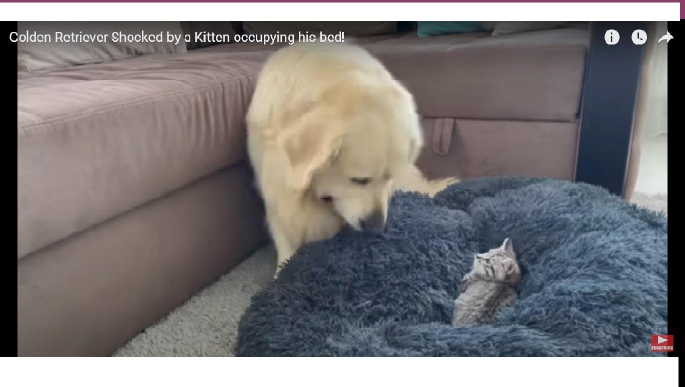 Un chien surprend un chaton sur son lit