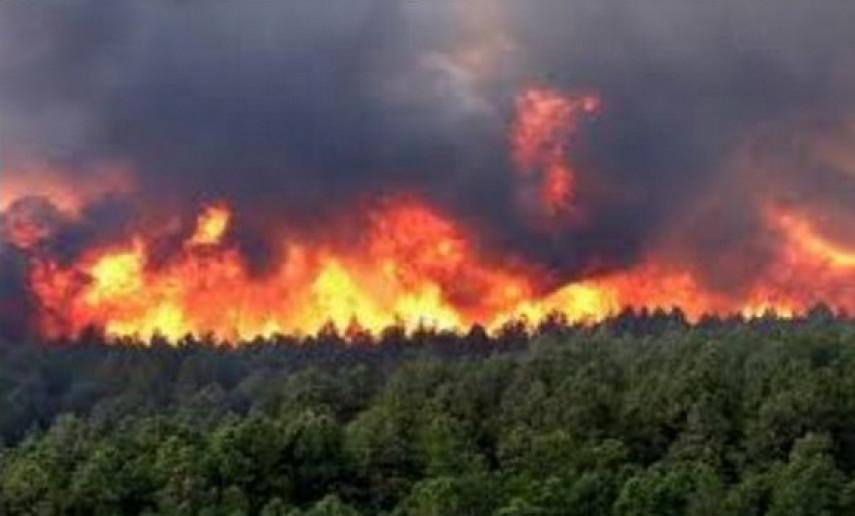 Les feux de forêt, un grand problème pour la planète